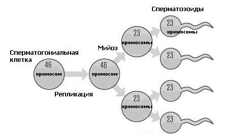 dlya-kachestvennoy-spermi-pitanie
